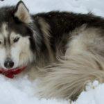 Snow Dec 17 2012 035